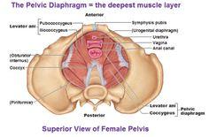 prolapsåterhämtning vaginal