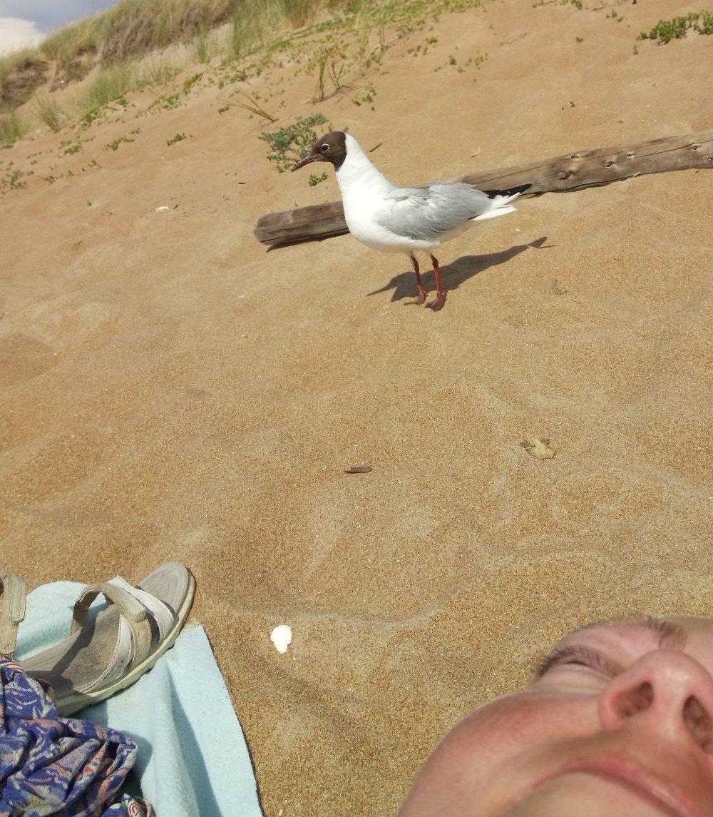 selfie naken fågelunge