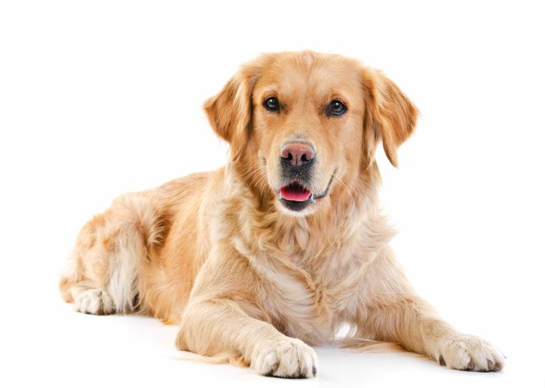 madona hund kön